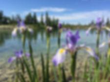 GP-Lake-iris.JPG