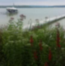 Shoreline stabilization garden