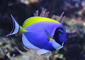 beaconpetfish.jpg
