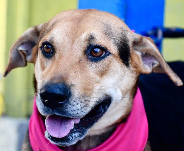 Funds raised from this year's Furball gala event will help unwanted pooches such as Peony, who was brought to the Humane Society shelter with her four pups.