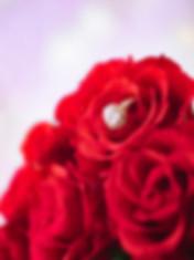 Roses-1176143-2.jpg