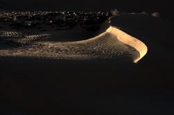 Truculent Dune 2019 הפראות של הדיונה
