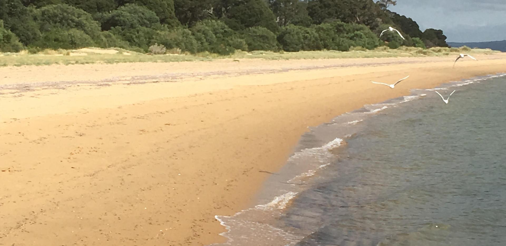Front Beach. Seagulls.jpg