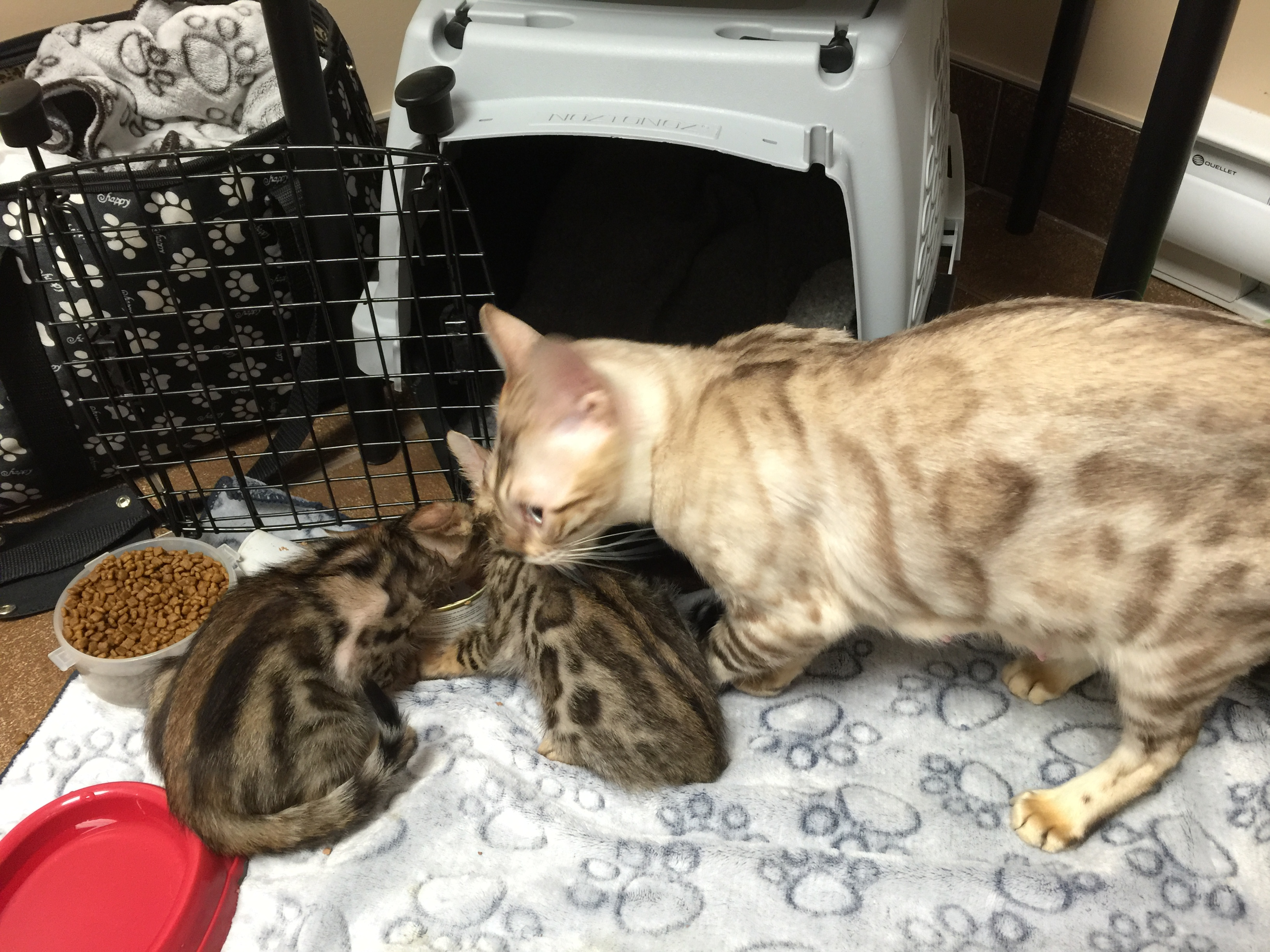 Madonna et ses chatons