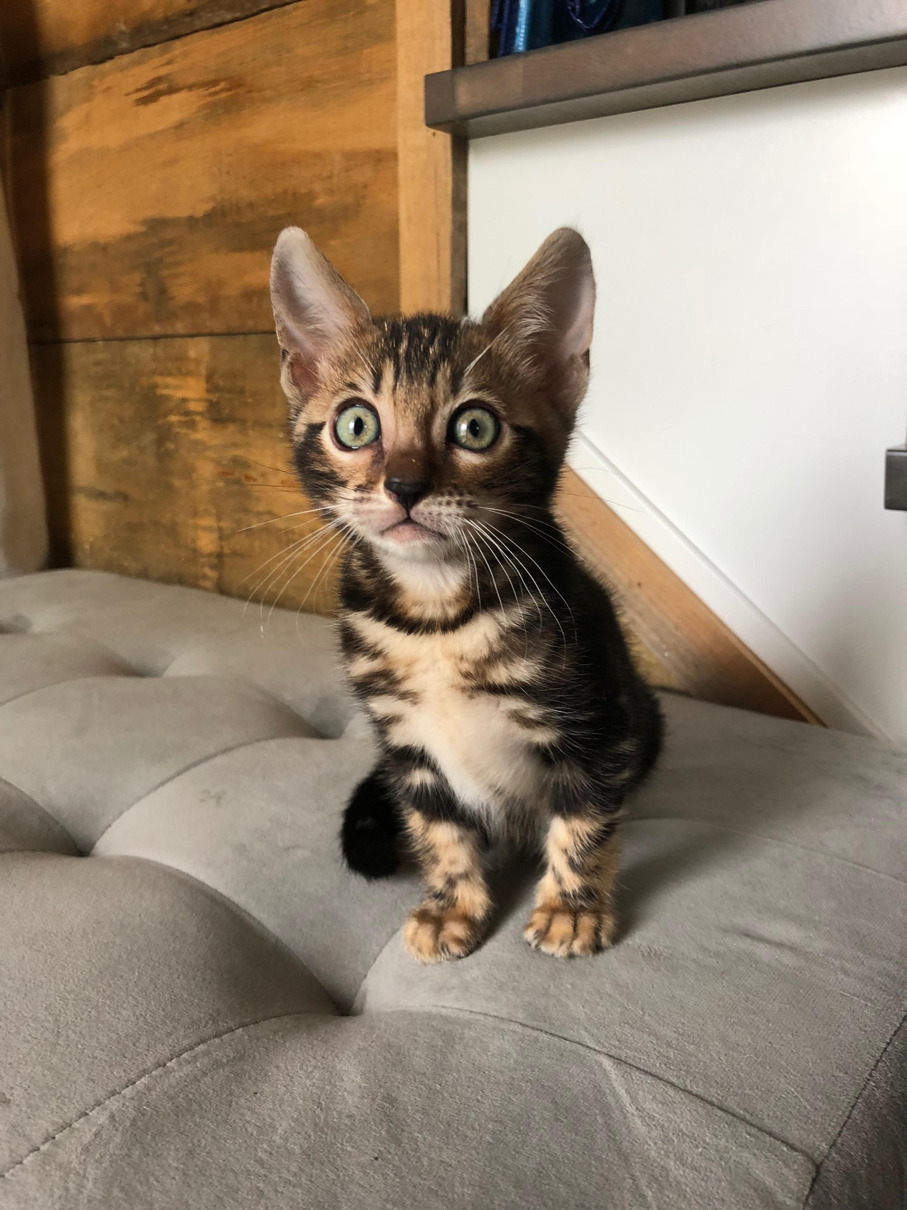 Saphira 10 semaines