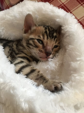 chaton dans un lit