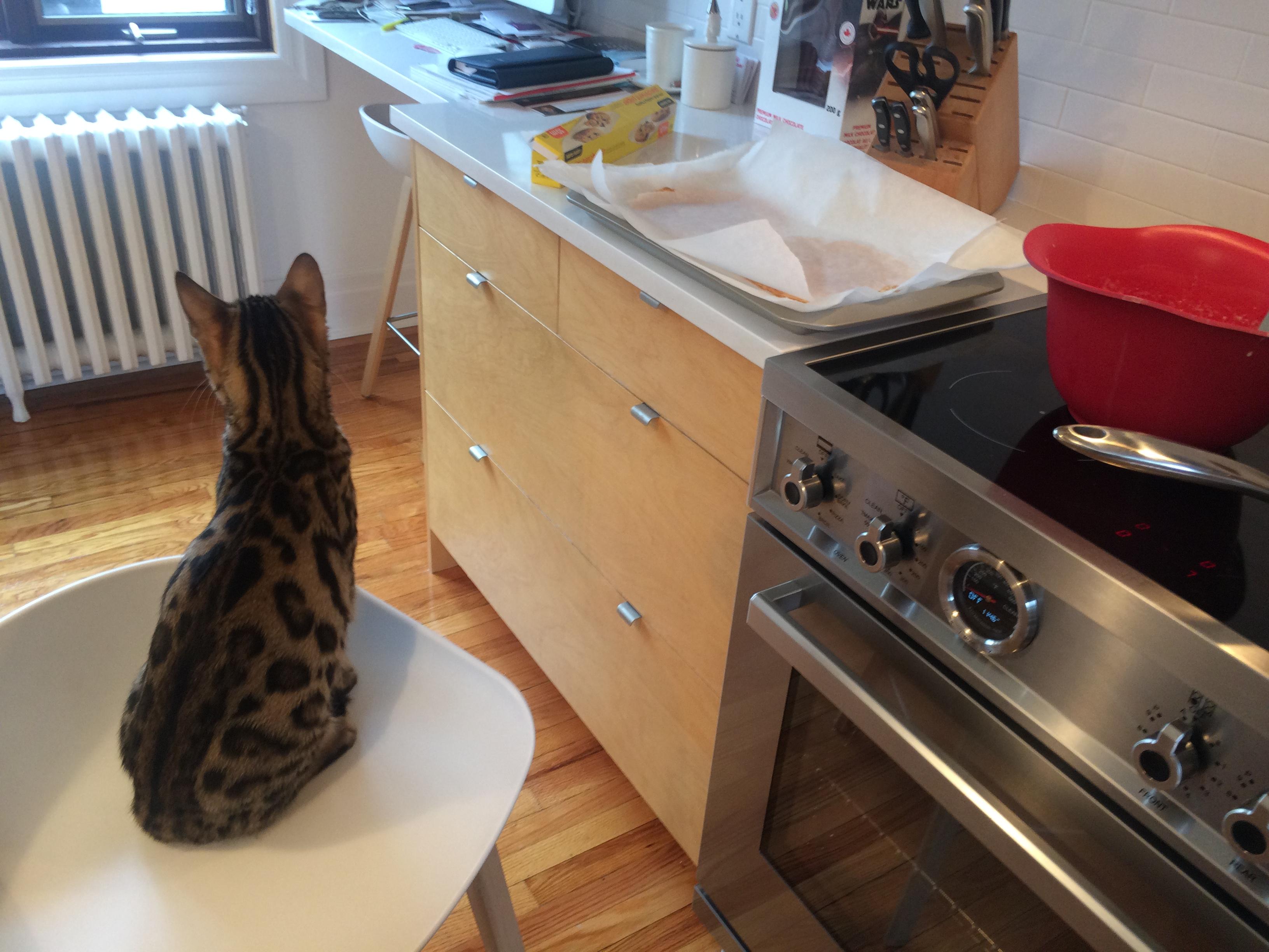 Zorro m'assiste quand je cuisine