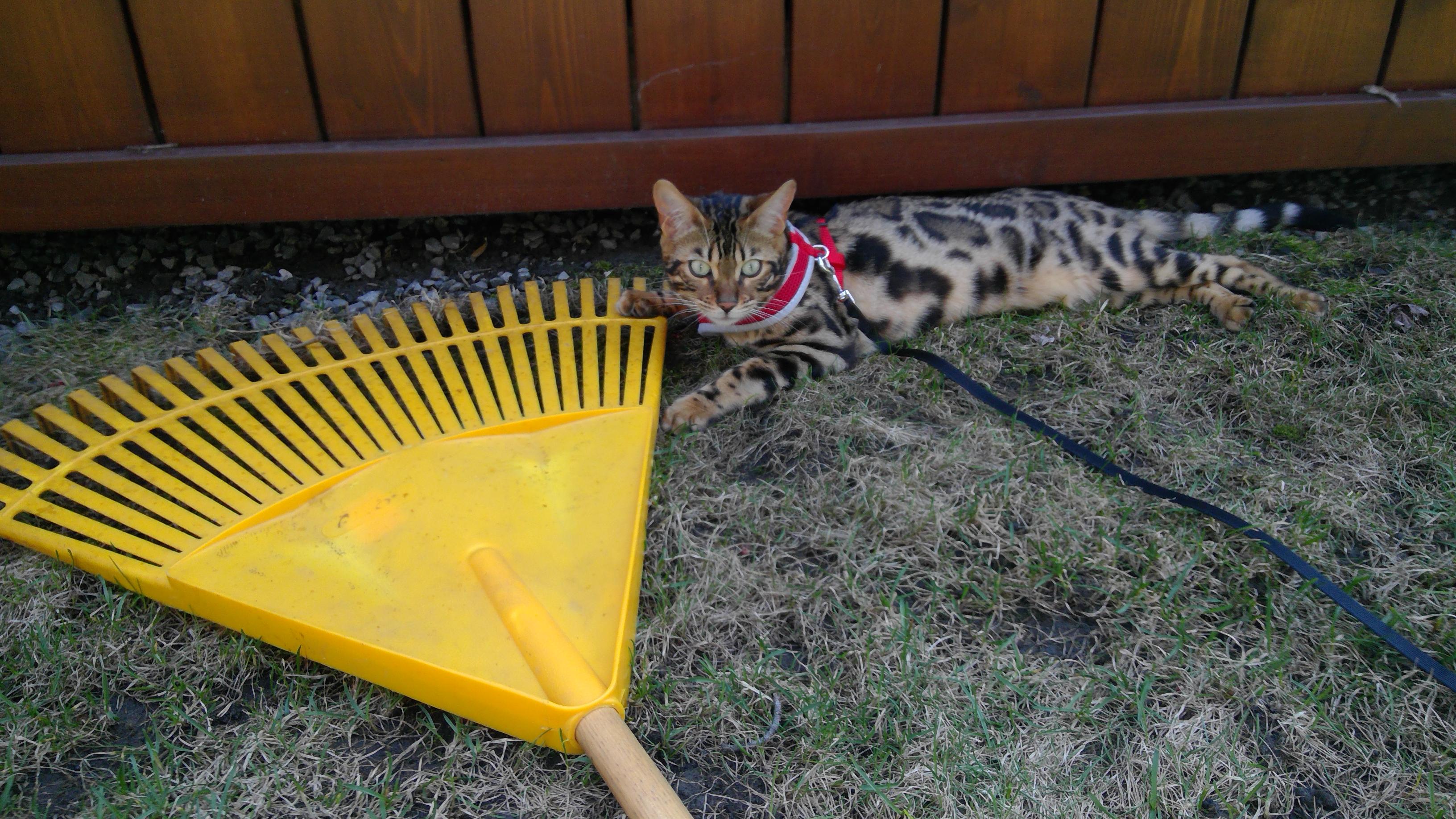 elle adore aller dehors