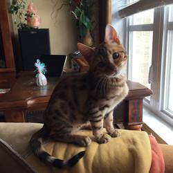 kayla qui attend sa nouvelle maman