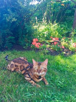 Bowie dans le jardin