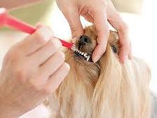 chien avec brosse à dent