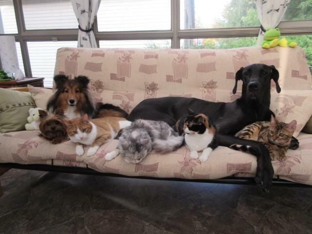 Kira 6 mois avec sa nouvelle famille