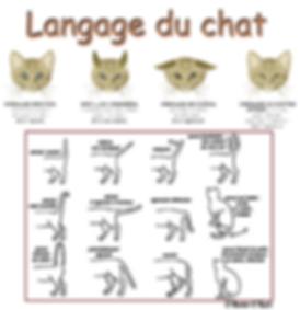 affiche langage du chat