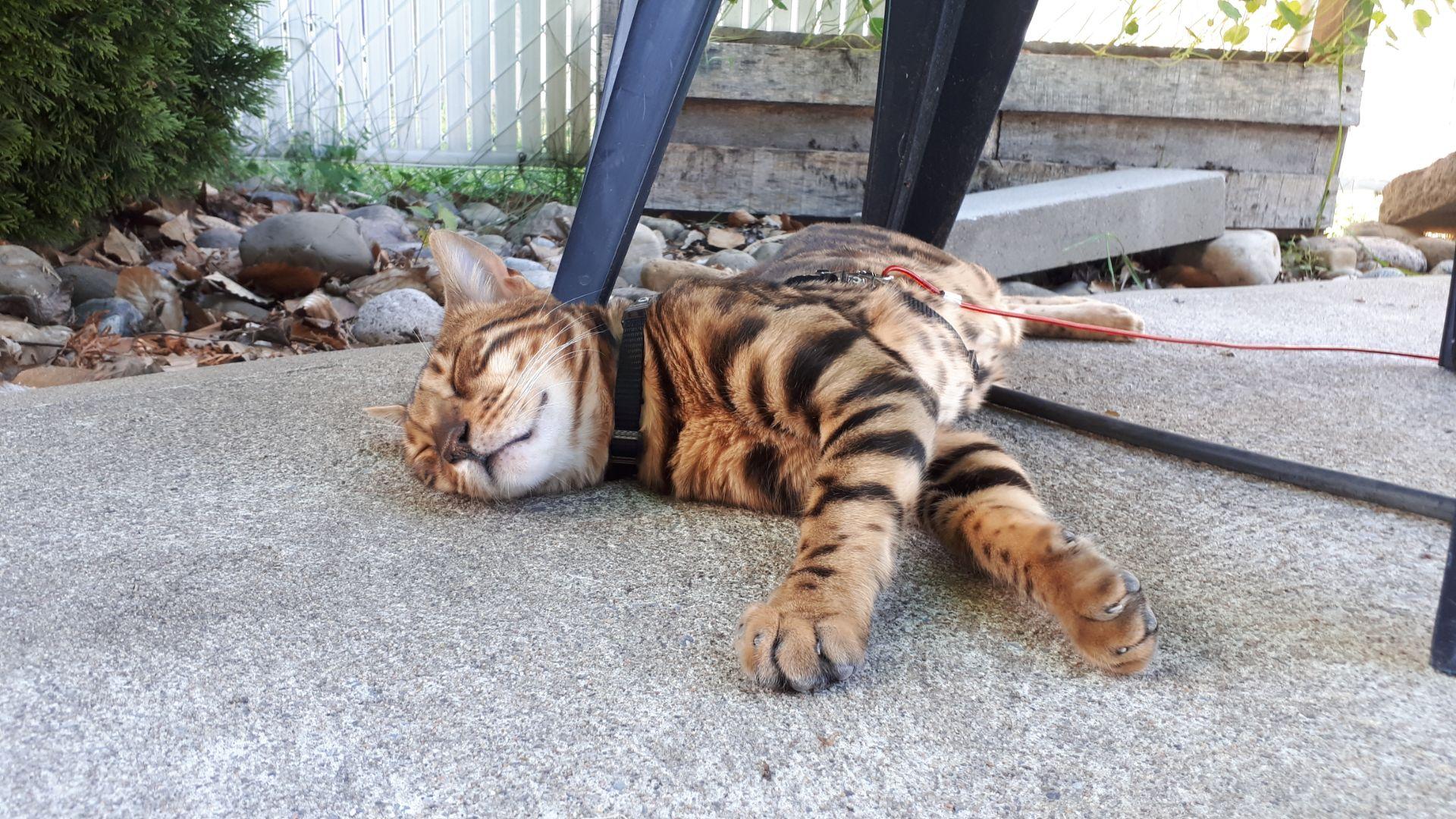 Rufus relaxe