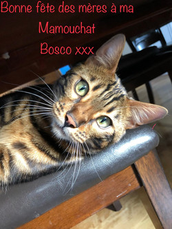 Bosco 1 an