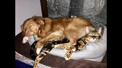 Méo et Ginger