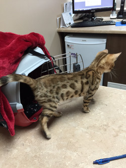 Kayla 3 mois, rappel de vaccin