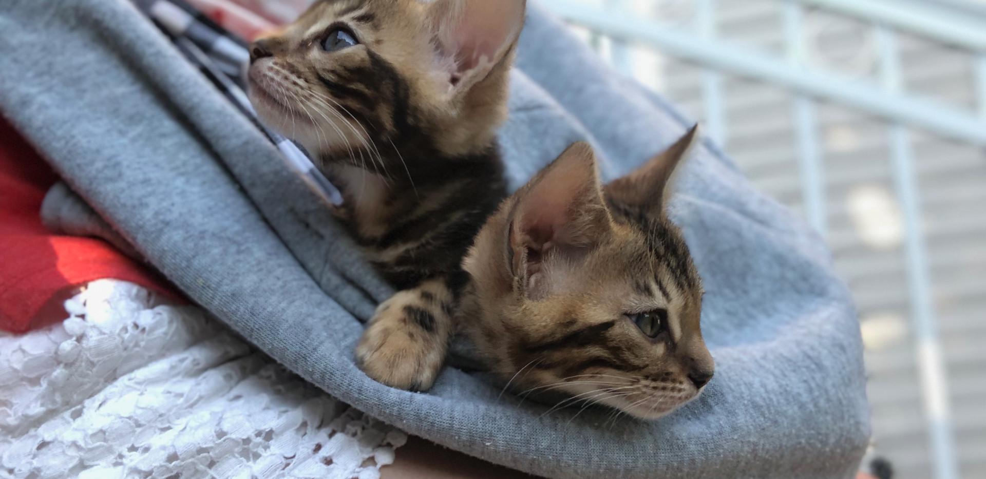 Luna et Mika