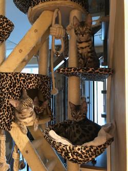 Mandy et ses chatons