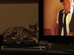 Rufus dort sur le film