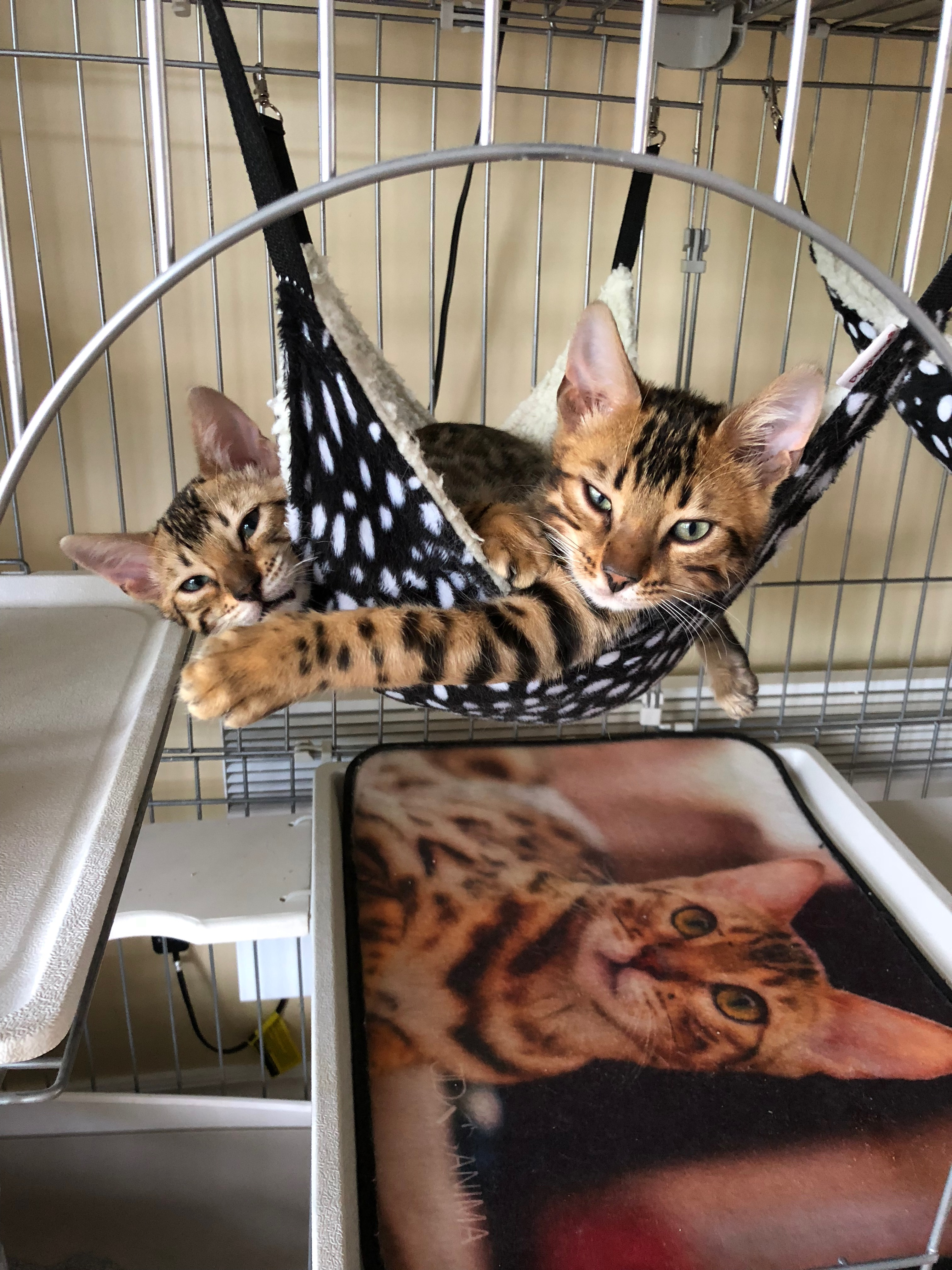 chatons aux repos