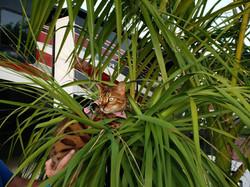 dans le palmier de la Floride