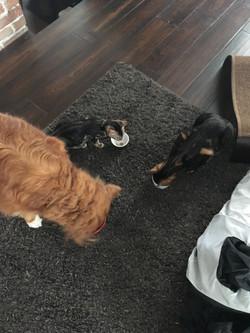 Juliette, Méo et Ginger
