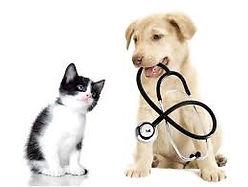 on reçcois les chiens et chats à notre Clinique vétérinaire Lemyre inc