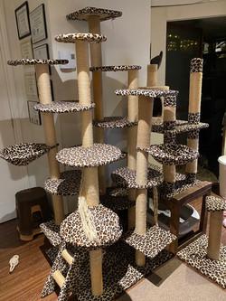 arbre adapter pour les chatons