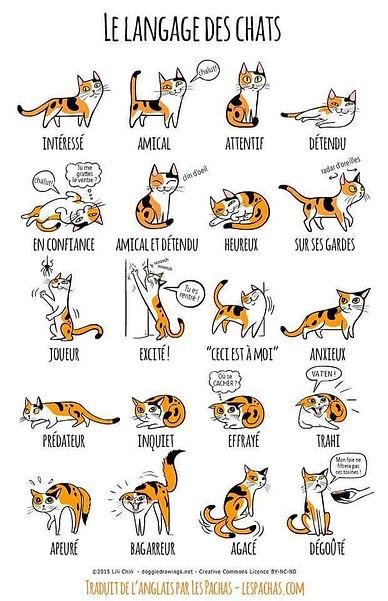 affiche langage des chats