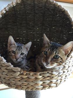 Henri et Bruno