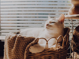 How to stage your home whilst living with pets