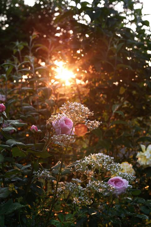 June in the old garden