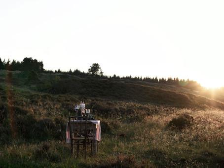 Evening sun on the moor