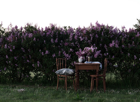 Tea by the lilac hedge