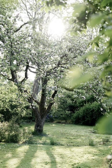 Garden in Denmark