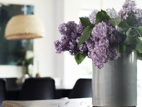 Lilac heaven