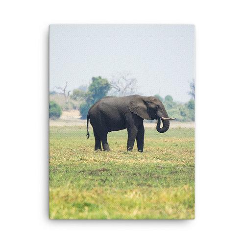 Canvas - Botswana