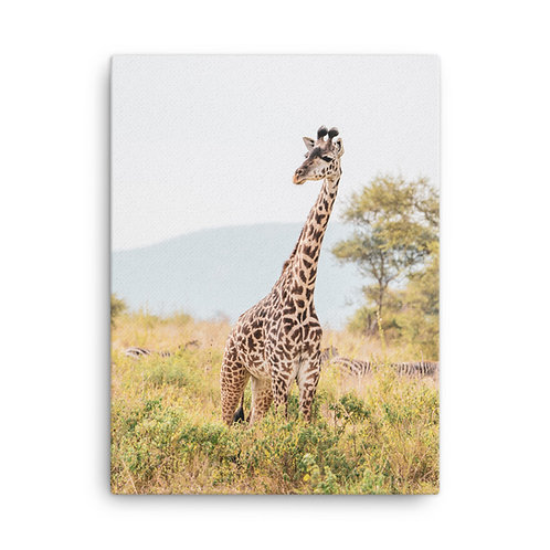 Canvas - Single Giraffe