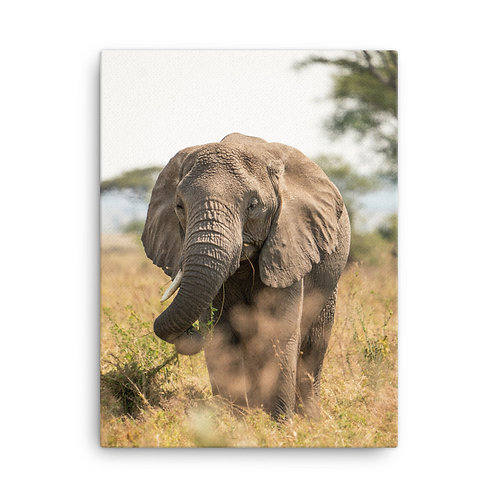 Canvas - Serengeti Elephant