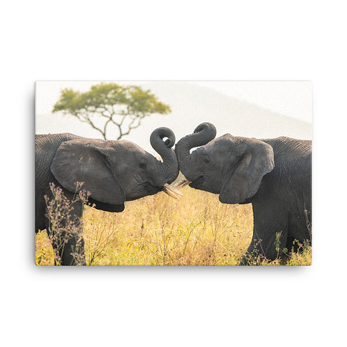 Canvas - Young Serengeti Elephants