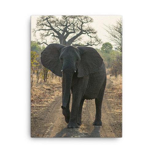 Zimbabwe Elephant