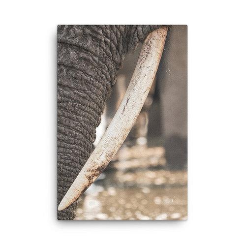 Canvas - Tusks