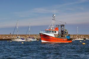 oceanfleet seafood direct source
