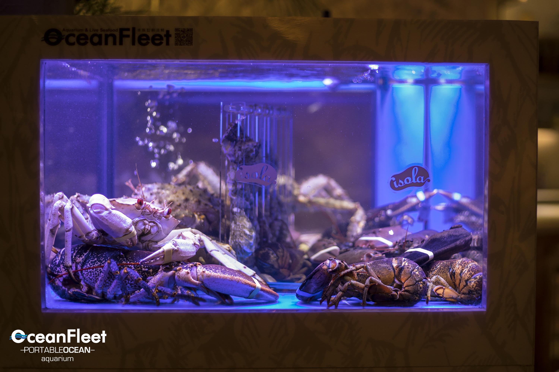 Seafood Storage Tank