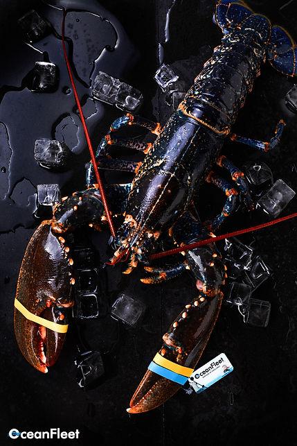 sustainable seafood oceanfleet seafood supplier