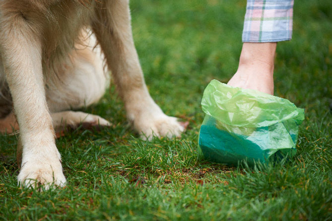 Dog-poop-getting-picked-up-by-human.jpg