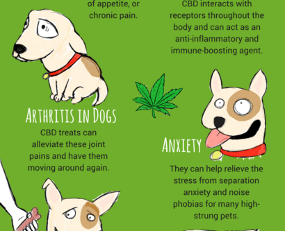 CBD for my Pet Dog or Cat