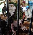 bird%20food_edited.jpg