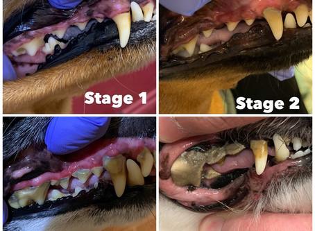 Dog Dental Care Tips!